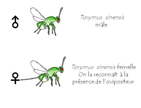 TsFMEnglish