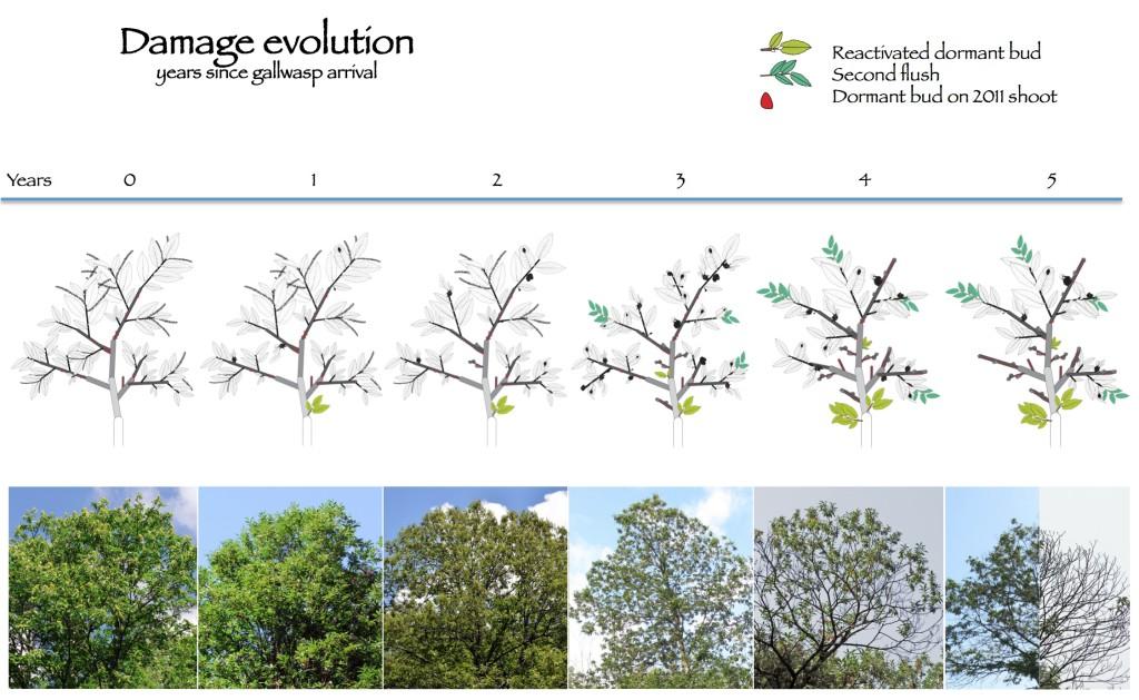 damage evolution